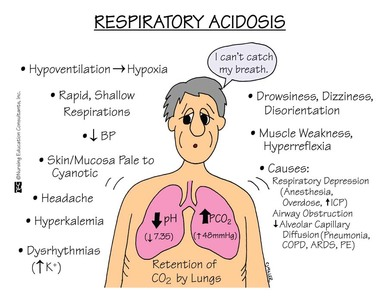 respiratory and metabolic acidosis and alkalosis - cardiovascular, Skeleton